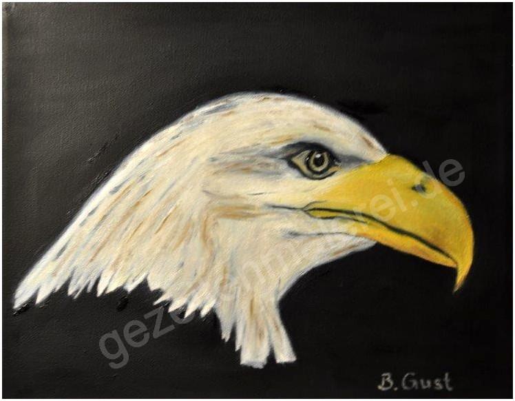41 Adler